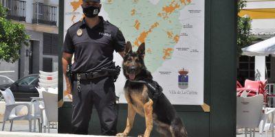 Rambo: de la perrera al 100% de éxito como policía