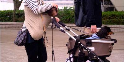 El año chino del perro acaba sin cambios en el país asiático