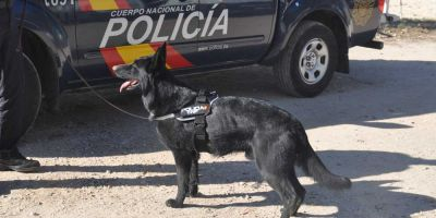 De perros obedientes a  agentes de cuatro patas: así han evolucionado los perros de la Policía Nacional