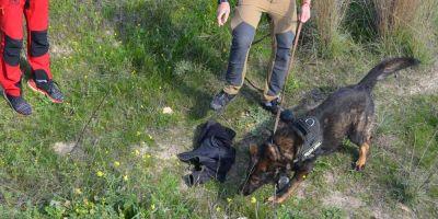 Perros que rastreaban a fugados de campos nazis ahora buscan a personas desaparecidas
