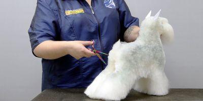 Peluquería y estilismo canino, una profesión en alza
