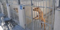 Nadie quiere ser adiestrador canino en Valladolid