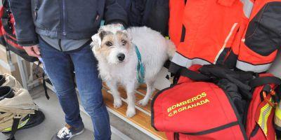 Perros en el Cuerpo de Bomberos, la garantía para los mayores