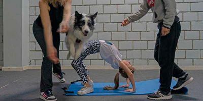 Los nuevos gimnasios: dueños y perros juntos