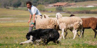 """""""Un perro con buena genética y bien formado puede ser mejor que el pastor"""""""