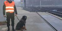 25 perros contra el vandalismo en el metro
