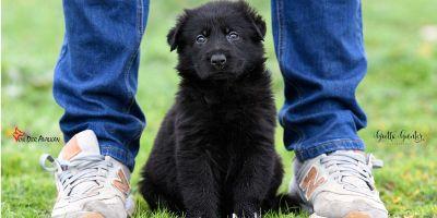 Tendencia en castración:tratar a cada cachorro como un caso particular