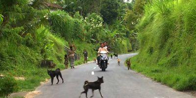 Bali: de pura raza a plato gastronómico