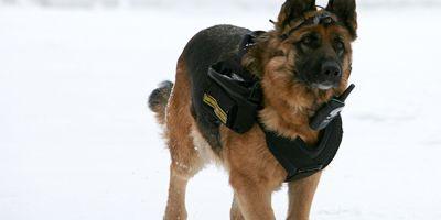Perros antiminas, los héroes rusos hechos de una pasta especial