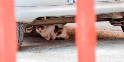 Qué hacer ante el atropello de un gato