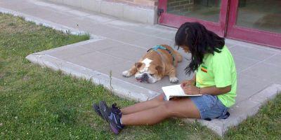 Perros de novela