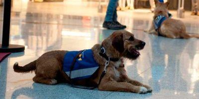 Un perro señal alerta de los sonidos a los sordos, que pagan 1.500 euros por tener uno
