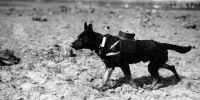 Los perros sanitarios, precursores  de los de rescate