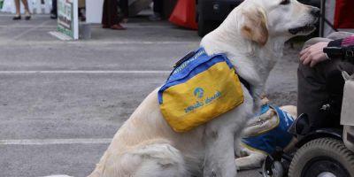 Caos en las Intervenciones Asistidas con Animales