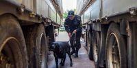 Labradores, los elegidos en la aduana de Bielorrusia