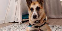 Arya, la perra que ayuda en los procesos de duelo