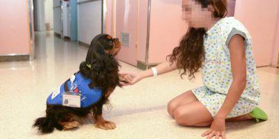 Una década de perros  en hospitales