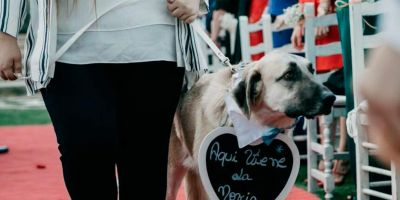 La nueva tendencia en bodas: incluir al perro