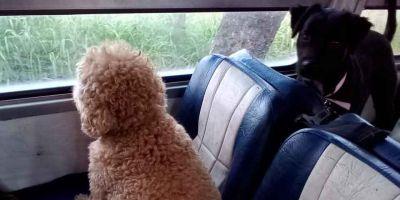 Paseadores de perros:  otro sector sin regular