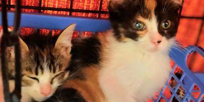 La aventura de adoptar un gato,  o dos
