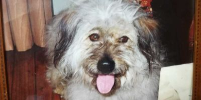 Viator, el perro con historia que transformó a García de Cortázar