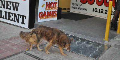 Bulgaria censa a los canes vagabundos y luego los devuelve a la calle