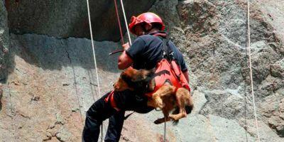 ¿Desaparecerán los perros de rescate?