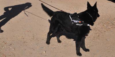 La Policía Nacional prefiere perros machos