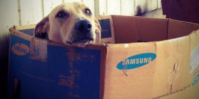Tu perro puede ser embargado por Hacienda