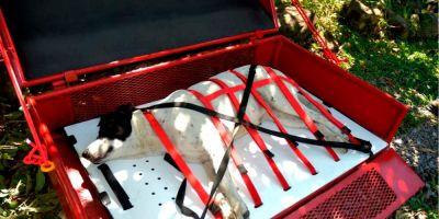 """Bugi, nuevo """"invento"""" para rescatar perros"""