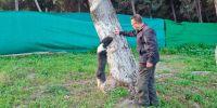 Un perro de agua detecta el picudo rojo, parásito que destruye las palmeras