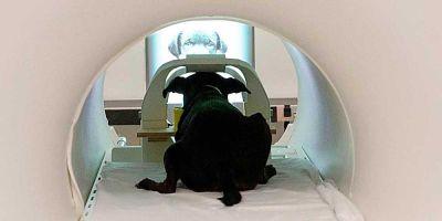 El cerebro de tu perro se activa cuando ve tu foto