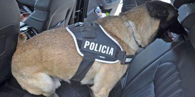 """Dylan, malinois de la Unidad Canina de la Policía Local De Venturada mantiene a """"raya"""" su municipio"""