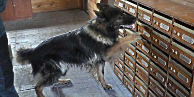 Arris: el perro que no dio tregua al dinero de los ERE