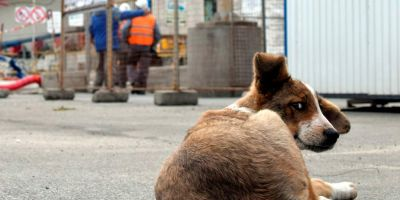 """Los perros de Chernobyl se convierten enexpertos """"vigilantes de seguridad"""""""