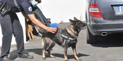 Las unidades caninas despiertan una ola de simpatía hacia la Policía