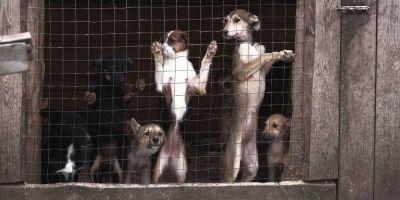 La UE obliga a que los perros tengan chip  pero no cruza las bases de datos de los países