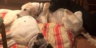 Empathia, santuario de perros ancianos