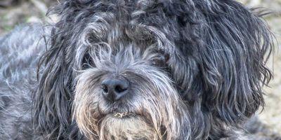 La contradicción de las leyes de protección animal