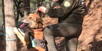 Andalucía añade cuatro perros contra el veneno