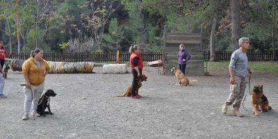 Educar a un perro es una necesidad, no un capricho