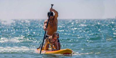 Moda veraniega: paddle surf con tu perro