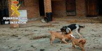 Maltrato animal: más denuncias, más detenidos y ¿más penas?