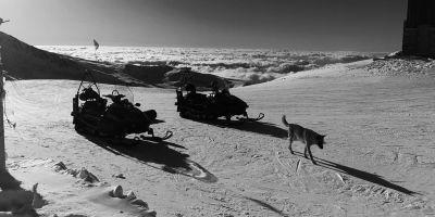 ¿Qué hace un perro de avalancha cuando no hay esquiadores?