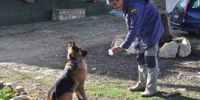 EE UU proyecta el primer centro de perros excelentes detectores del mundo