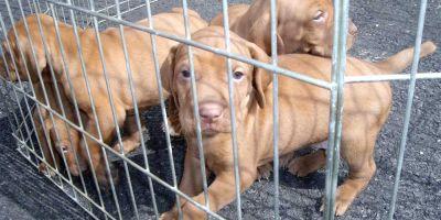 Europa inicia de forma tenue el camino contra el tráfico de animales