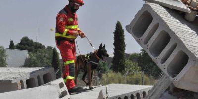 El corazón de los perros de trabajo, en riesgo por su elevada excitación