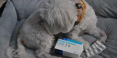 Cómo actuar ante una intoxicación en perros