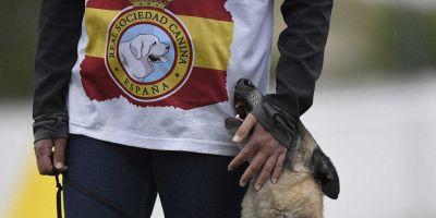 Las competiciones caninas no necesitan polémicas absurdas