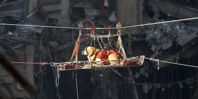 El 11-S redefinió a los perros de rescate y a los de terapia